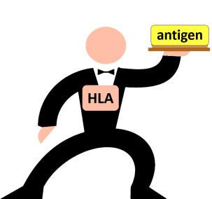 HLA waiter1